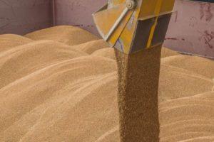 Автотранспортом в Украине перевозится 25 процентов зерновых